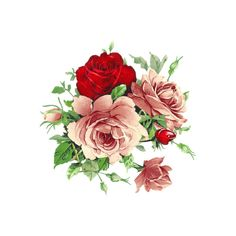 vintage roses | Shareapic.net ❤ liked on Polyvore featuring home, home decor, floral decor, flowers, fillers, roses, backgrounds, decor, flower home decor and flower stem