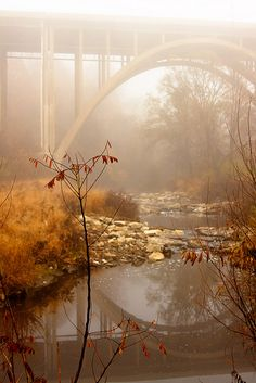 ★ INTO THE MIST (Foggy Frick Park, Pittsburgh, Pennsylvania, by Melissa @ PPC, via Flickr)