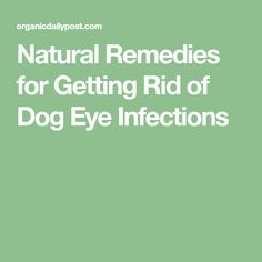 Natural Remedies for Getting Rid of Dog Eye Infections