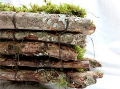 Moss Book by Bridgette Guerzon Mills