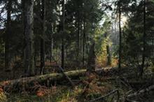 Lasy Nadleśnictwa.