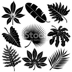 leaf stencils | tropical leaves Royalty Free Stock Vector Art Illustration