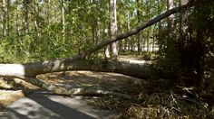 whitemarsh preserve trail during the clean up efforts after hurricane matthew. 10/16/2016