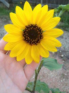Sun flower power:)