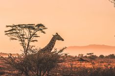 Think beyond basic camps and upgrade to true luxury when planning your African safari! These four top the list when it comes to the best safari in Africa. Serengeti National Park, Kruger National Park, National Parks, Tanzania, Monte Kilimanjaro, Africa Destinations, Vacation Destinations, Dream Vacations, Wanderlust