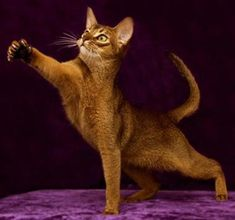 Cat Breeds | Cats by Patricia
