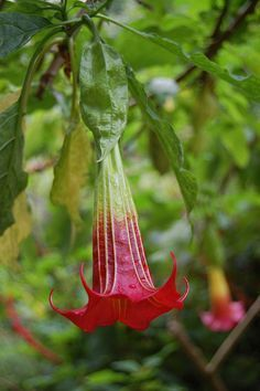 We like plants. Shade Garden, Garden Plants, Trumpet Lily, Vintage Gardening, Trumpets, My Secret Garden, Arte Floral, Flowering Trees, Cut Flowers