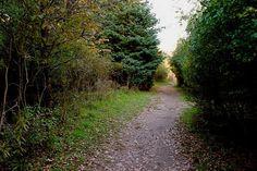 Trail in the nature preserve at Binghamton University
