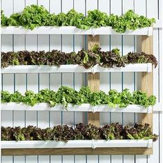 You can make a vertical garden with vinyl rain gutters and a little bit of fencing material. | 11 Simple Summer Projects Anyone Can Build In Their Backyard