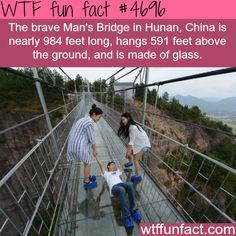Glass bridge in China - WTF fun facts