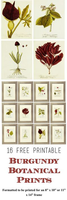 16 Free Printable Botanical Prints