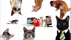 Social MeowDia Explained by cute cats