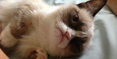 10 x Hilarische memes van de meest chagrijnige kat ter wereld #Humor