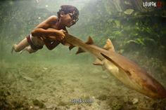joy #shark