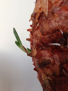"""Dead or alive ? - Mort ou vif ?""   Made of onion peels."