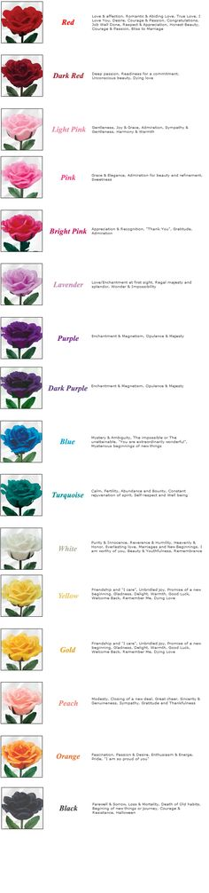 Rose Color Meanings by kawaii