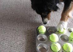 4 idées pour fabriquer un jouet pour chien : le puzzle pour chien, pour entraîner son flair ;)