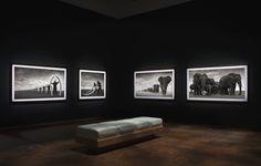 Inherit The Dust: Nick Brandt - Exhibition: London