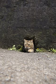 """Kitty-Cat:   """"This is my secret underground subterranean tunnel!  You should see what I've got stashed down there!""""   ♥"""