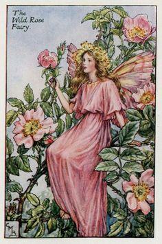 Wild Rose Flower Fairy Vintage Print, c.1927 Cicely Mary Barker Book Plate Illustration
