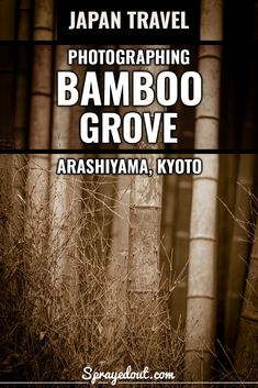 """Bamboo Grove in Arashiyama: Famous """"Forest"""" in Kyoto, Japan Taking Pictures, Free Pictures, Wonderful Places, Beautiful Places, Japan Travel Photography, Some Beautiful Pictures, Famous Places, Kyoto Japan, Instagram Worthy"""