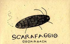 Learning Italian Language ~ Scarafaggio (cockroach) IFHN