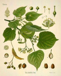 Green Leaf Botanical Art  16x20 by KSarahDesigns on Etsy, $16.00