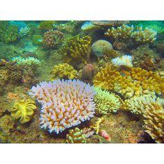 #greatbarrierreef #snorkeling #reef #coral #queensland #cairns #australia #travelling #bucketlist #underwater #underwatercamera by lucybrins http://ift.tt/1UokkV2