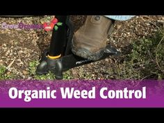 Organic Weed Control - Mulch, Corn Gluten Meal, Flamers and More! - YouTube