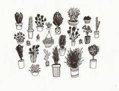 Plantas 2 by Maybe - http://holamaybe.tumblr.com/
