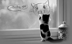 Missing You!  A kitten standing under a picture drawn on the window.