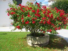 Un puits fleuri à Compiègne