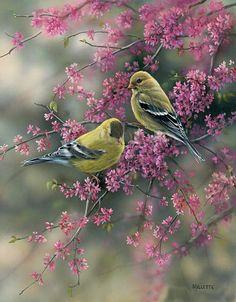 Primavera ~ Rosemary Millette Finch in Redbud tree