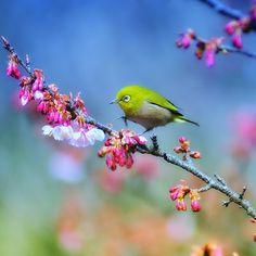 la belleza insuperable de la naturaleza