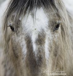 Update: The Adobe Town Wild Horses Arrive at Black Hills Wild Horse Sanctuary | Straight from the Horse's Heart