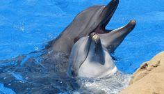 """Dois golfinhos foram gravados pela primeira vez a ter uma """"conversa"""", graças a…"""