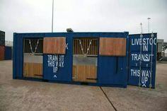 Container transporte caballos.