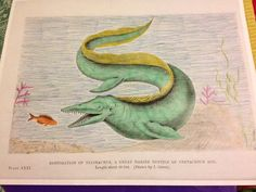 #ColorOurCollections @BioDivLibrary