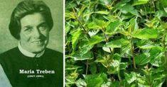"""""""Dacă oamenii ar ști ce efect Tămăduitor are Urzica, n-ar mai cultiva decât urzici!"""" Maria Treben Fitness Diet, Health Fitness, Detox, Herbs, Pandora, Remedies, Varicose Veins, The Body, Herb"""