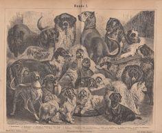 1876 * HUNDE Original Druck / Antique Print * Boxer Bernhardiner Dachshund Mops
