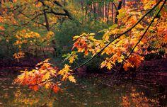Autumn VI by Watze D. de Haan