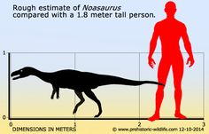 Noasaurus