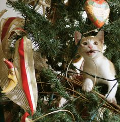 Funny Photos of Cat and Christmas Tree Cat Christmas Tree, Christmas Kitten, Christmas Animals, Xmas Trees, Holiday Tree, Christmas Holiday, Holiday Cards, Baby Cats, Cats And Kittens