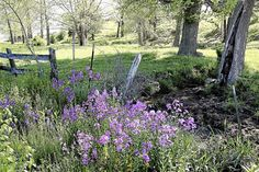 The Many Benefits of Using Native Plants in Your Landscape