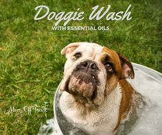 Love this DIY Dog Wash with Essential Oils recipe. Super easy and cost effective to make and leaves you with a smoochable pooch.