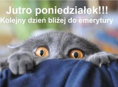 Be Afraid, Be VERY Afraid! - LOLcats is the best place to find and submit funny cat memes and other silly cat materials to share with the world. We find the funny cats that make you LOL so that you don't have to. Cute Cats, Funny Cats, Funny Animals, Cute Animals, Chartreux Cat, Bulldog, Grey Cats, Cool Pets, Funny Animal Pictures