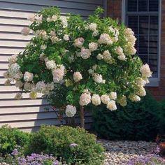 hydrangeas, garden design and yard decorations