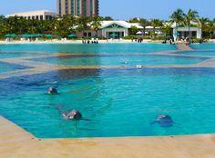 *Dolphin Cay, Paradise Island, New Providence, Bahamas.
