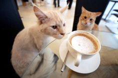 Katzencafe! How cool is that??