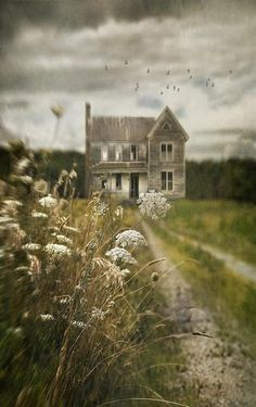 queen anne's lace and old farmhouses = my favorite!